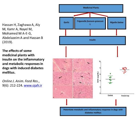-_inflammatory_and_metabolic_responses_in_dogs