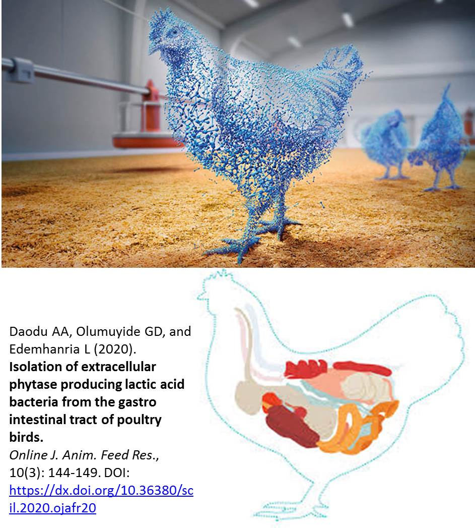 1135-phytase_producing_lactic_acid_bacteria_in_poultry_birds
