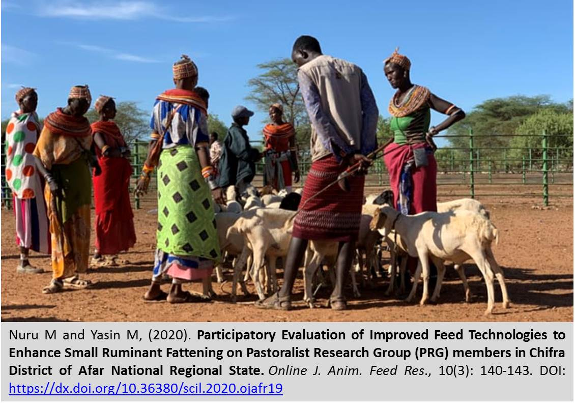 1141-Enhance_Small_Ruminant_Fattening_on_Pastoralist_Research_Group