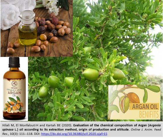 1169-chemical_composition_of_Argan_Argania_spinosa_L._oil-