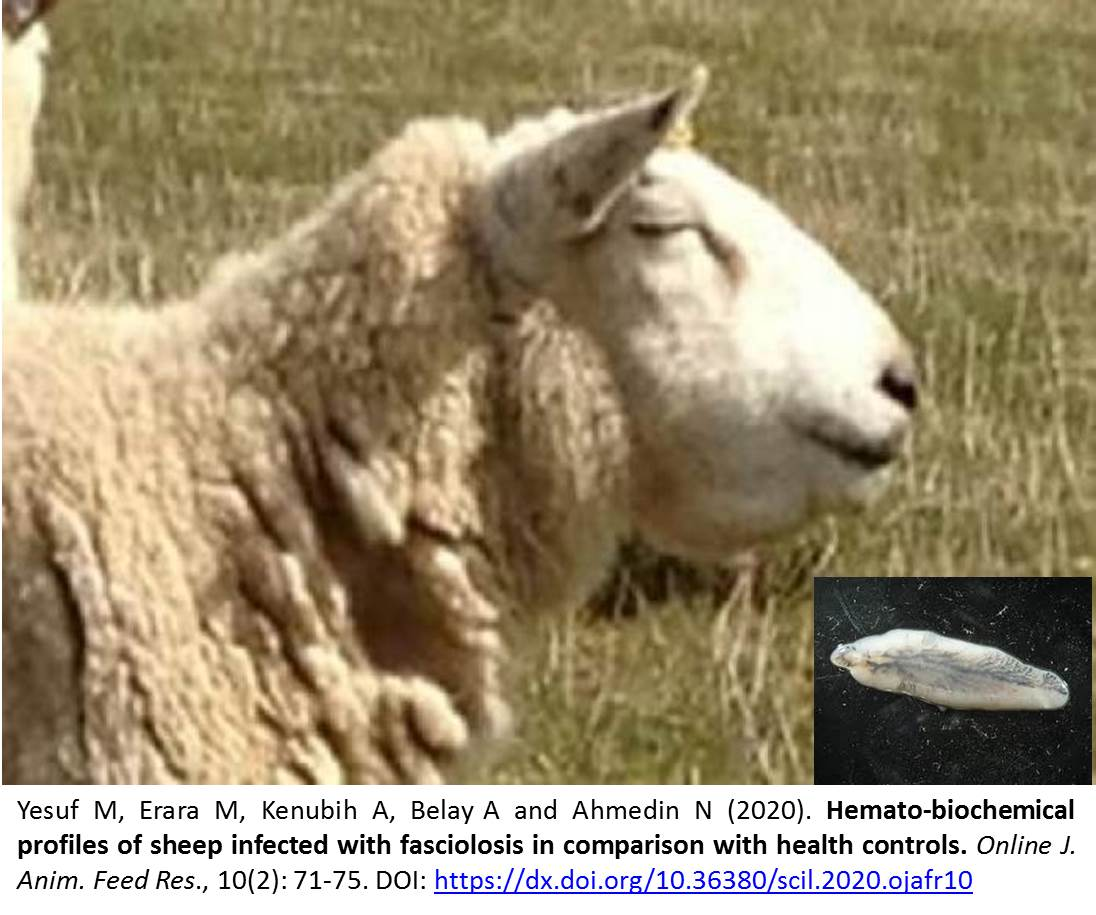 Hemato-biochemical_profiles_of_sheep_infected_with_fasciolosis