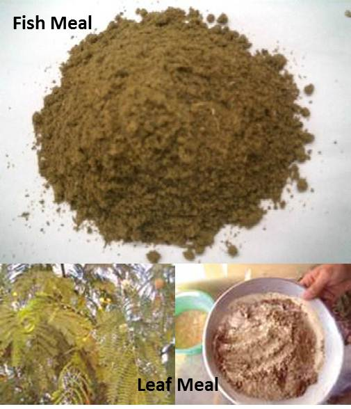 OJAFR_B22___FISH_MEAL_vs._LEAF_MEAL