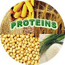Protein_ingredients